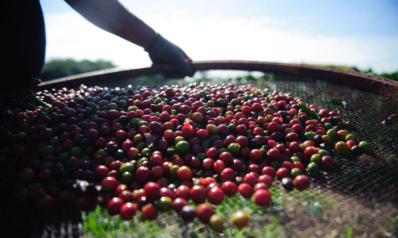 Perda na safra e alta procura fazem preço do café disparar