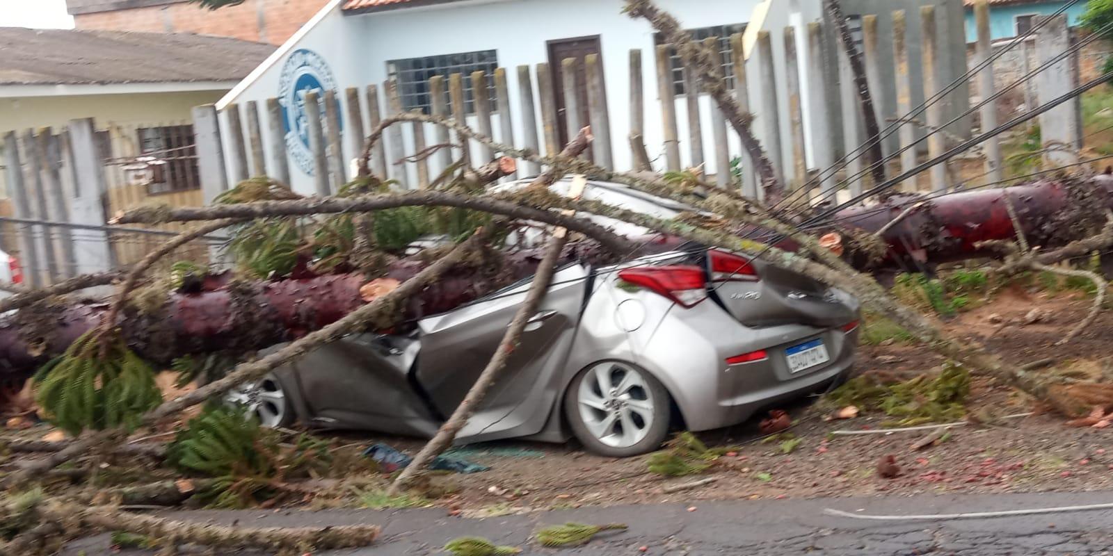 Agora: Árvore esmaga carro no bairro Santa Marta em PG