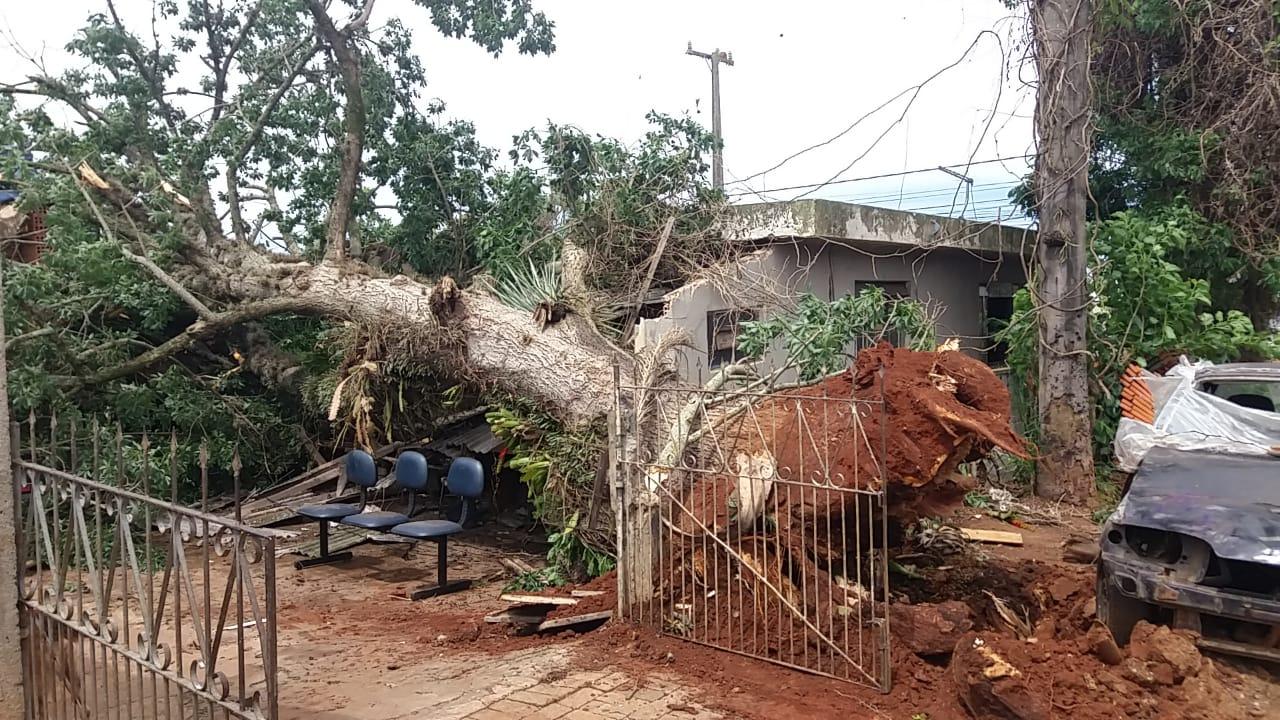 URGENTE: Árvore cai sobre casa em Ponta Grossa; Crianças estariam dentro